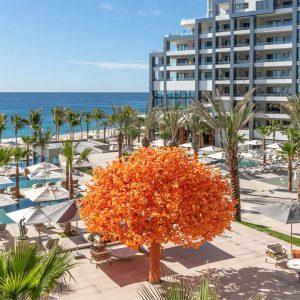the orange tree at garza blanca los cabos