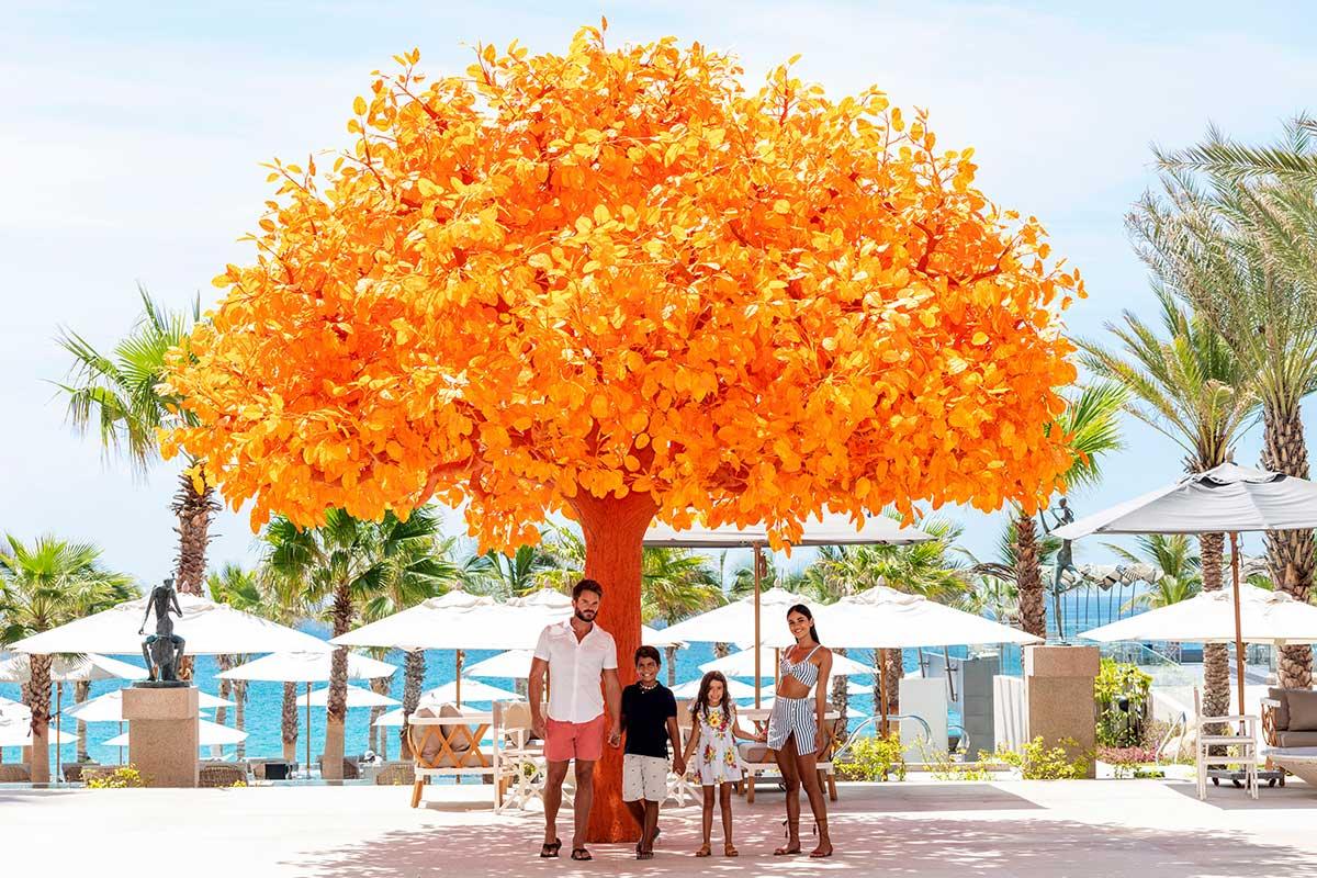 orange tree at garza blanca los cabos