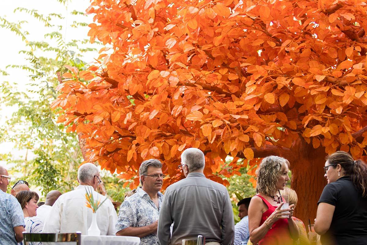 orange tree at garza blanca preserve