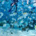 Playas en Cancún con distintivo Blue Flag